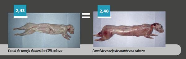 canal-conejo