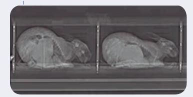 Escaner para el diagnóstico de la gestación de la coneja