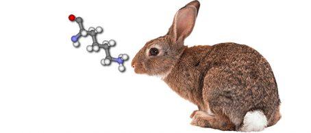 l-lisina para alimentación de conejos