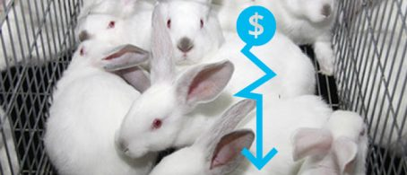 Crisis de precios conejos