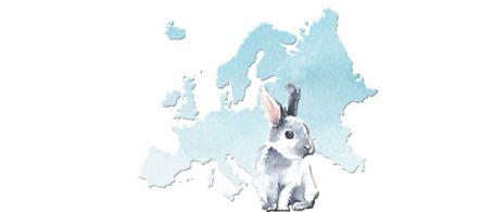 bienestar conejo