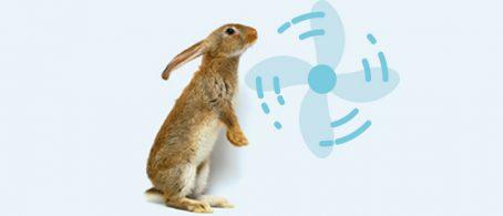 ventilacion conejos