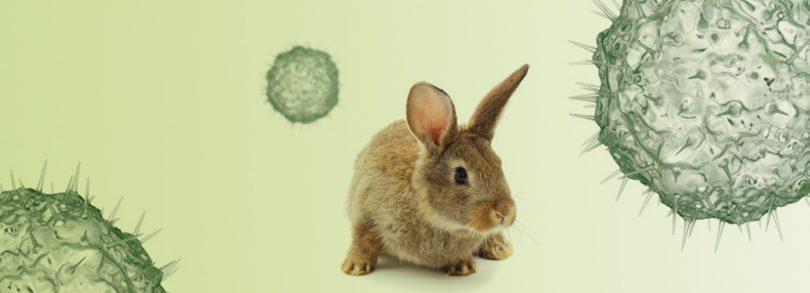 Enfermedad hemorrágica del conejo