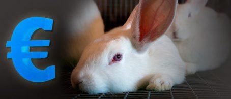 Conejos precios