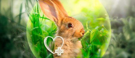 Bienestar en el conejo