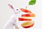 nutrición conejos