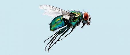 moscas en granjas