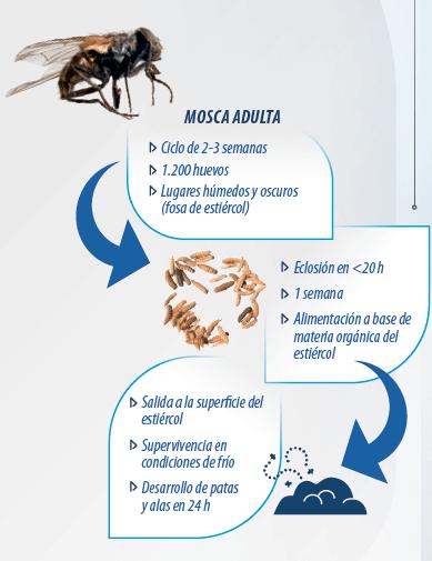 Control de moscas